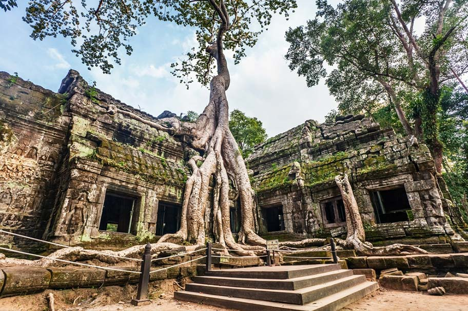 Angkor Wat Tempel von Bäumen zugewachsen