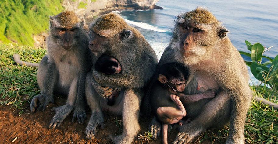 Bali Ferien Kinder wilde Affen