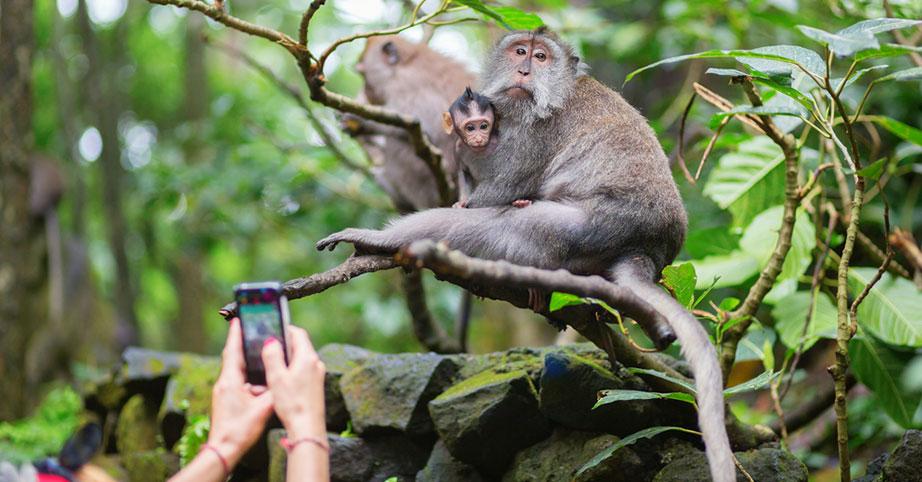 Bali Handy Telefonieren
