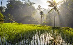 Bali Reisefelder Vulkane