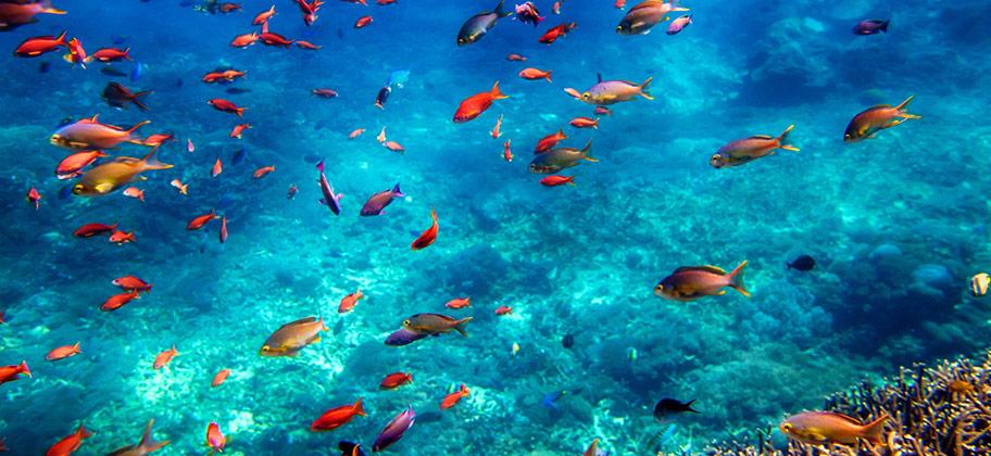 Bali Menjangan Schnorcheln Fischschwarm