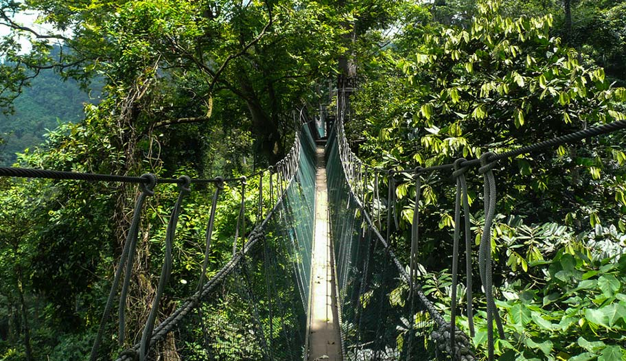 Hängebrücke im Urwald von Malaysia Familienabenteuer
