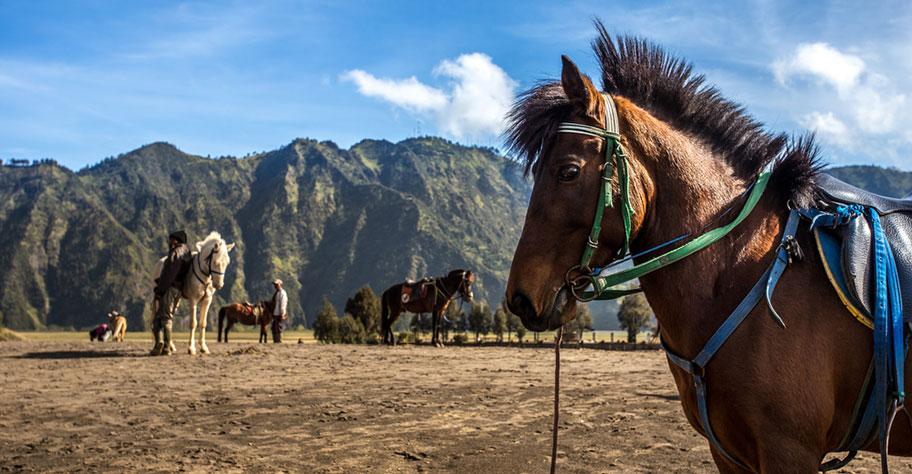 Mit dem Pferd auf den Bromo reiten