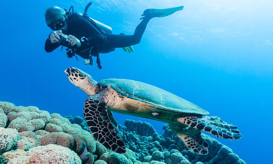 Tacher mit Schildkröte auf den Philippinen