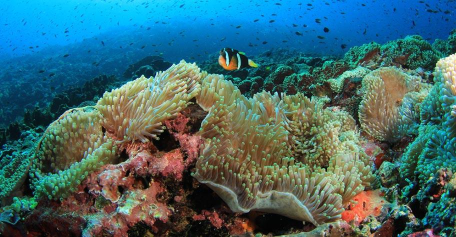 Unterwasserwelt Philippinen Korallenriff viele Farben