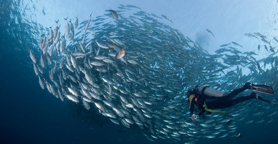 Tauchen in Bali Fischschwarm