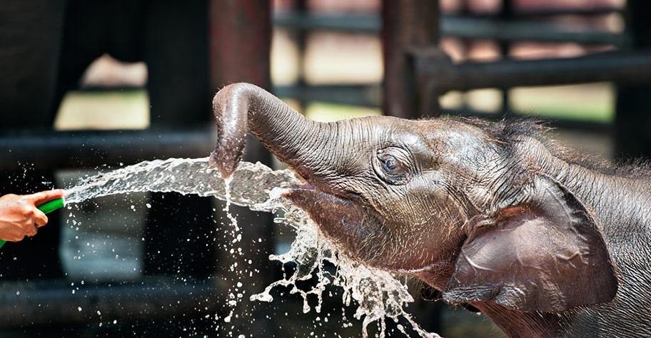 Thailand Elefanten Safari