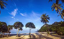 Palmen Strand Thailand Insel Koh Muk